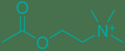 estructura química acetilcolina